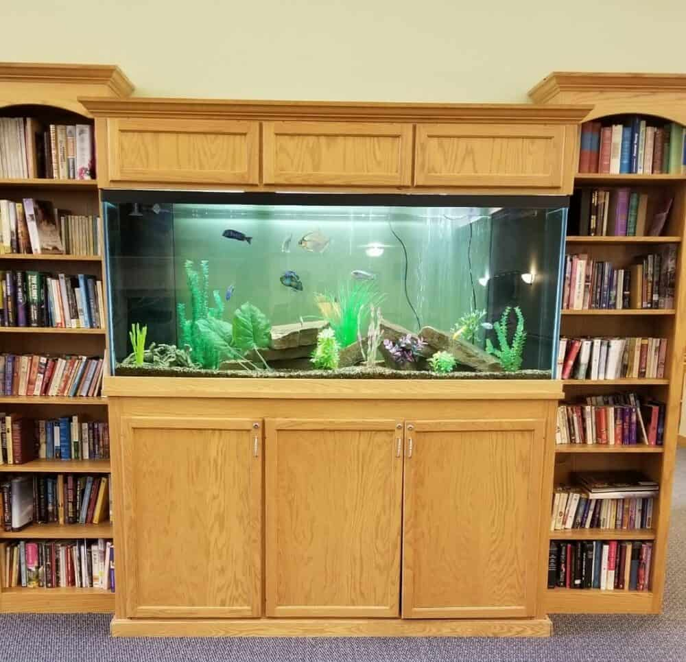 fish tank at the waterford at colby senior living in wisconsin